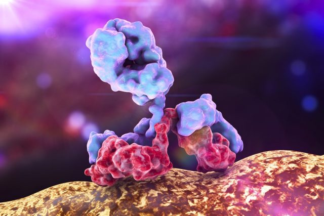 Antibody attacking bacterium., 3d view