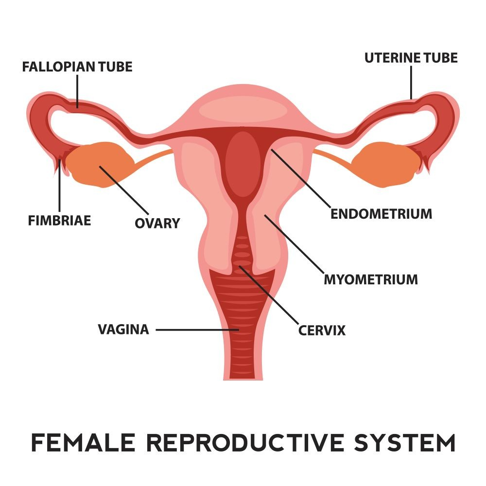 What is the meaning of the word fertility