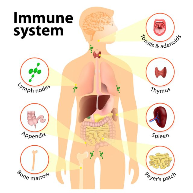 immune system diseases  types  symptoms  prevention