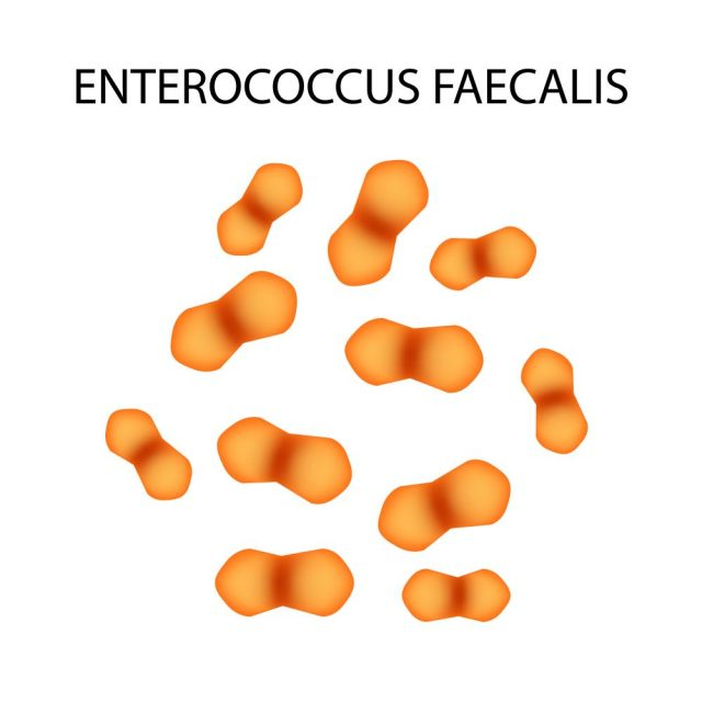 Enterococcus Faecalis Infection