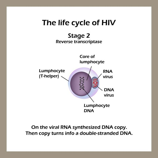 Stages of HIV & AIDS