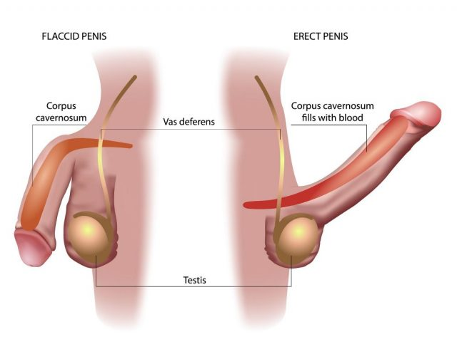 Testicle and Penis Pain