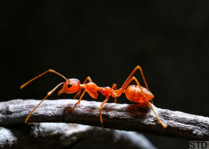 Macro shot of red ant in nature. Red ant is very small