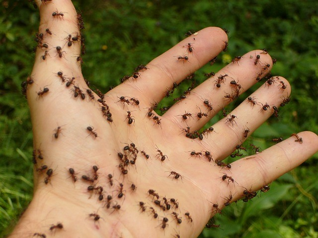 Things to know about ant bites allergic reaction