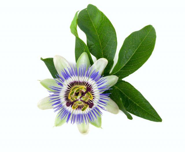 best aromatase inhibitor steroids