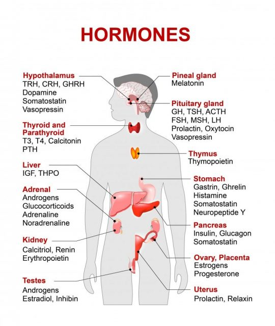 Hormones: Human silhouette with highlighted red color internal organs and hormones.