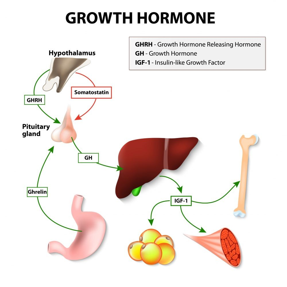 Growth Hormone Therapy | risks, cost, side effects