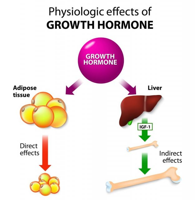 Physiologic Effects of Growth Hormone. Direct and indirect effects