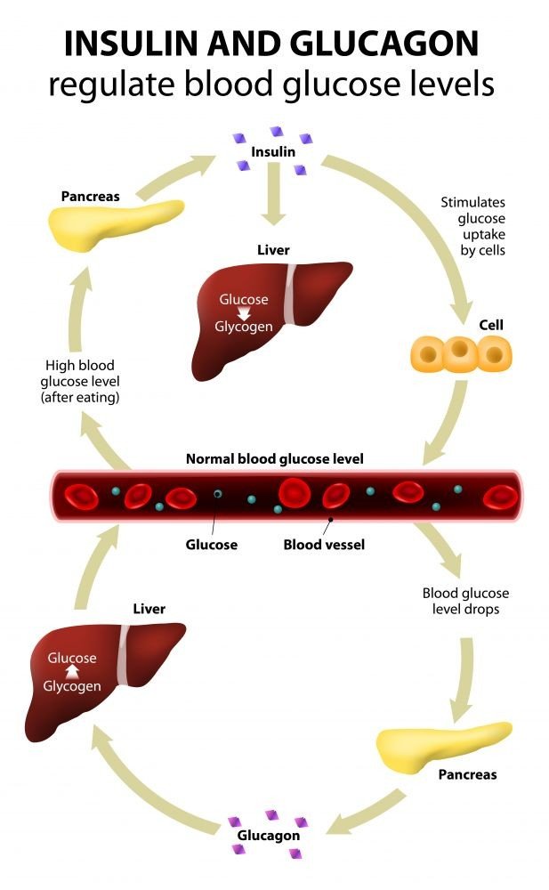 pathophysiology of diabetes what is it reasons infographics. Black Bedroom Furniture Sets. Home Design Ideas