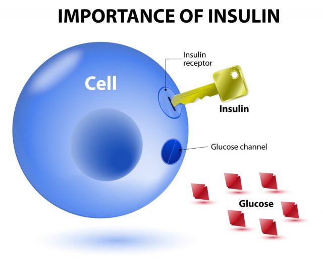 Insulin acts as the key which unlocks the cell to allow glucose to enter the cell and be used for energy. Insulin is a hormone secreted by the pancreas in response to elevated blood levels of glucose.