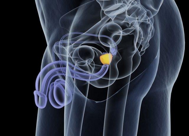Prostate Function: Secretions