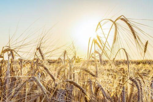 Prostate Pain: Rye Grass Pollen