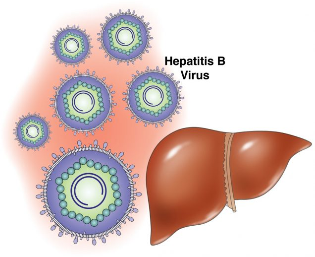 Hepatitis B Causes and Transmission