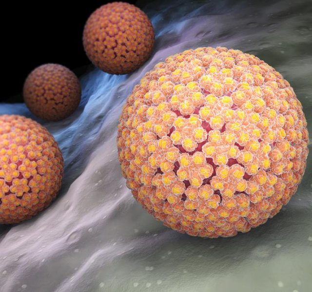 Human papillomavirus (HPV) is a DNA virus from the papillomavirus family. 3D illustration