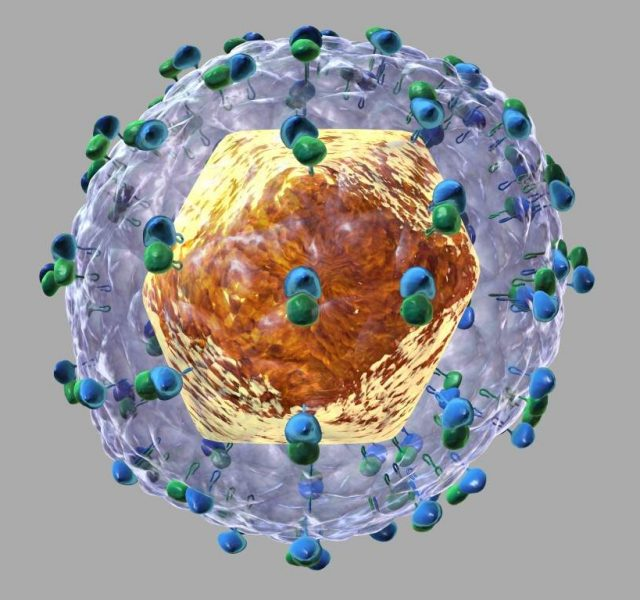 Hepatitis C virus HCV 3D illustration