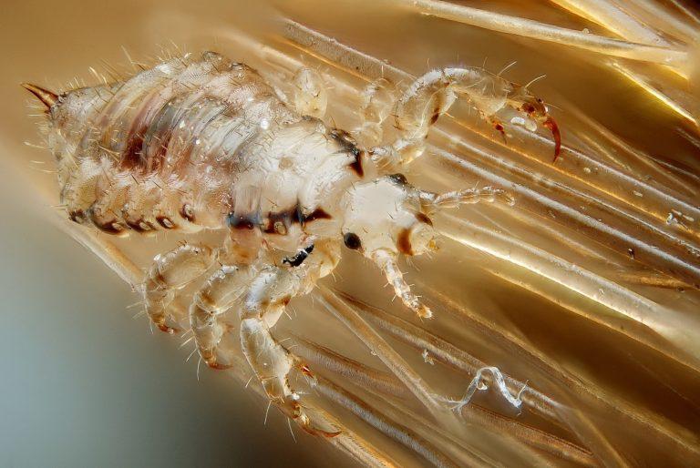 Сонник жуки в голове в волосах фото