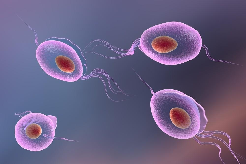 Trichomoniasis Symptoms  Treatment  Pictures