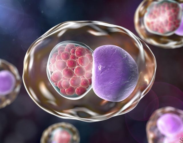 Chlamydia inclusion in human cells, 3D illustration