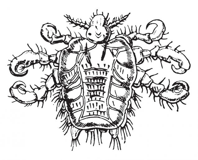 Crabs STD