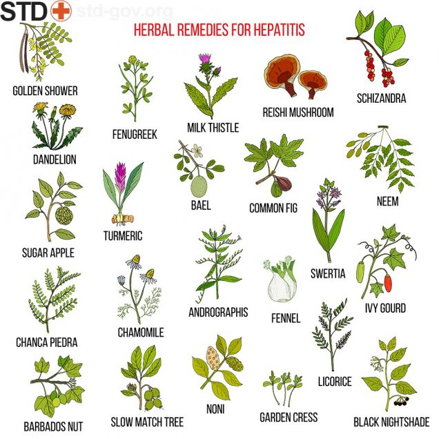 Herbal remedies for hepatitis