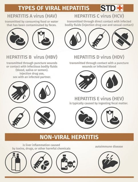 Types of viral hepatitis, infographic